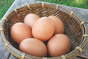 自然に近い広い鶏舎で、のびのびとかけまわる元気な鶏のたまごです。 日本で育種改...